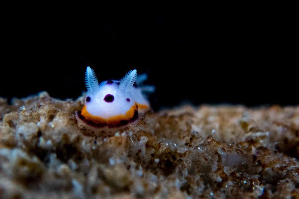 รีวิวภาพถ่ายใต้น้ำจากกล้อง Olympus TG6